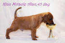 """At 45 days old, Alan ate his first Cup of his mother's Peri Klan Miracle. Cup """"best baby Of the national breed Club"""".<br />  Alan is a very friendly and sociable boy."""